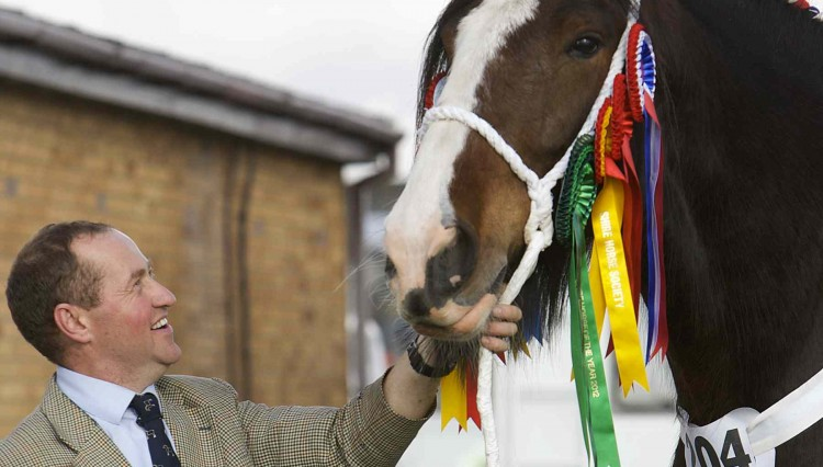 Y Fillies and Mares 157 1 750x426 - Over 300 Shire Horses gather for National Show in Lincolnshire