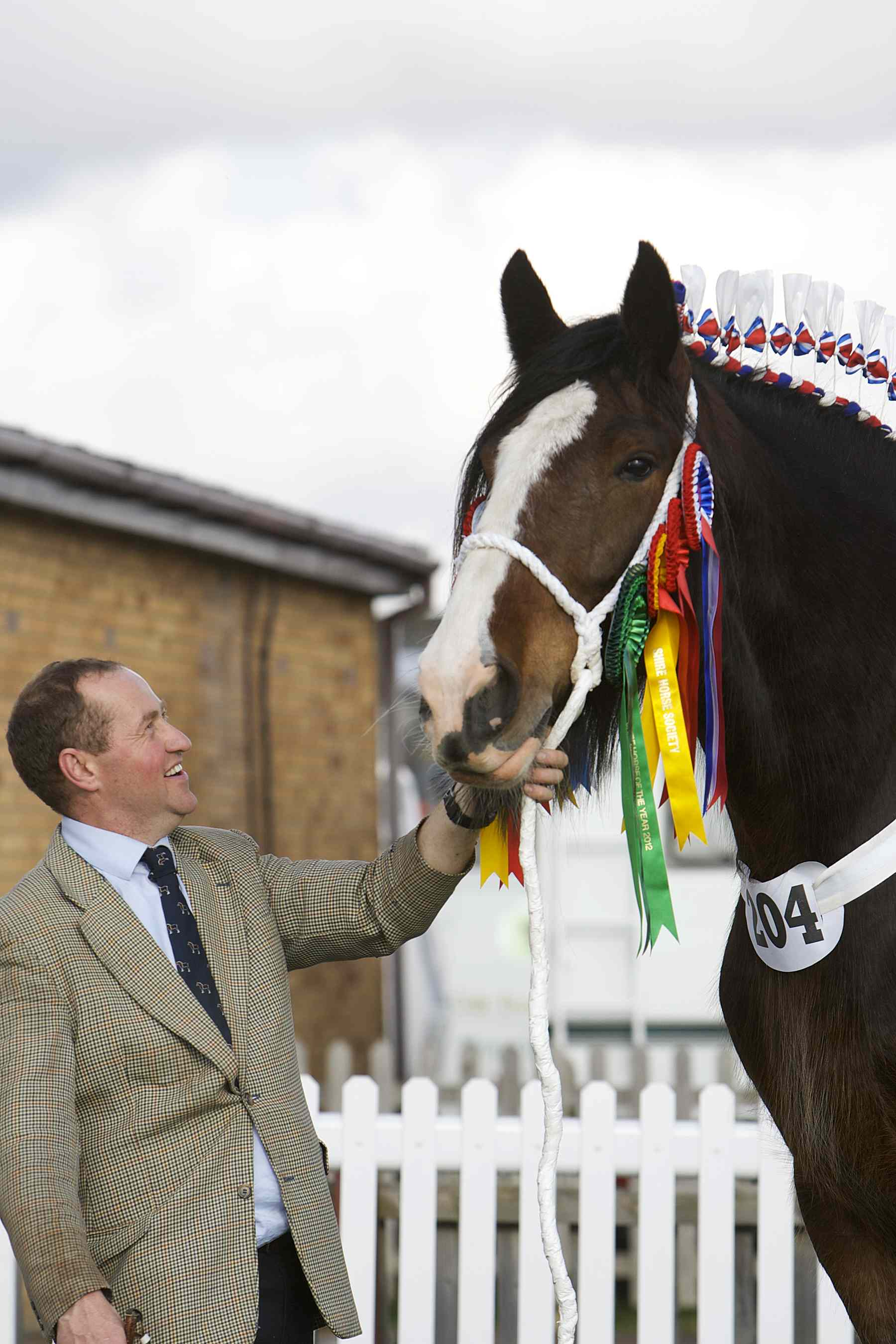 Y Fillies and Mares 157 1 - Over 300 Shire Horses gather for National Show in Lincolnshire