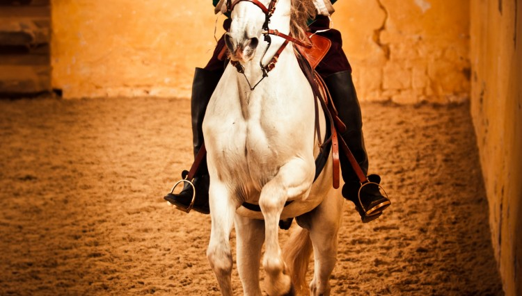 Bolsover 750x426 - Enjoy an exclusive evening of dressage in the stunning surroundings of Bolsover Castle