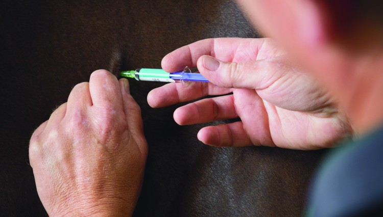 Equine flu 1 750x426 - Multiple Equine Flu Outbreaks confirmed in East Yorkshire, Cumbria and Scottish Borders