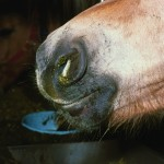Equine flu 2 150x150 - Multiple Equine Flu Outbreaks confirmed in East Yorkshire, Cumbria and Scottish Borders