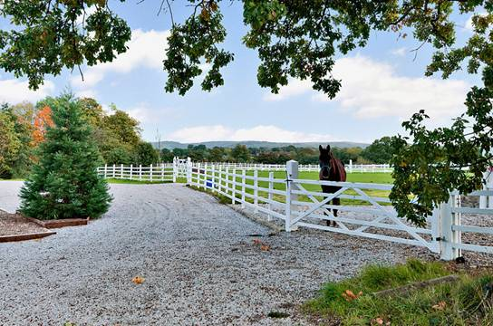 Studimage002 - Internationally renowned stud farm near Macclesfield receives top equine award