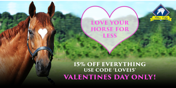 valentines mag img 2 - Love your horse this Valentine's Day with Blue Chip Feed