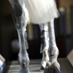 hoof image- science supplements