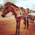 Injured horse cart 150x150 - Vets with Horsepower 2015 ride again for the Gambia Horse and Donkey Trust