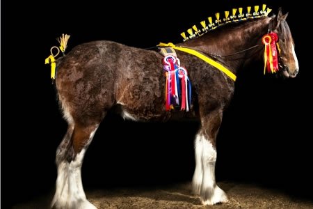 shire - New home for Shire Horse Society National Show for 2016