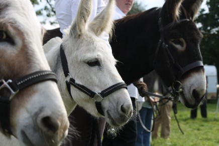 HorseHage Sponsors Donkey Classes at Llansawel Show