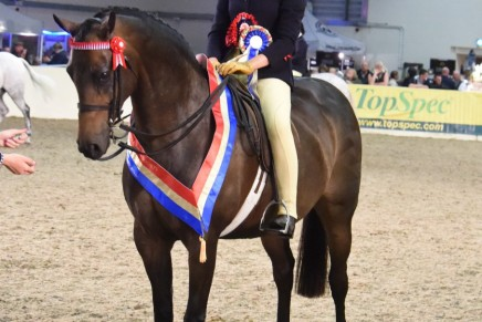 The Hard Work Proves Worth it for Savannah at Equifest