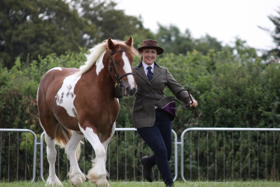 A story of lifelong love – stable hand rehomes horse after helping to rehabilitate him