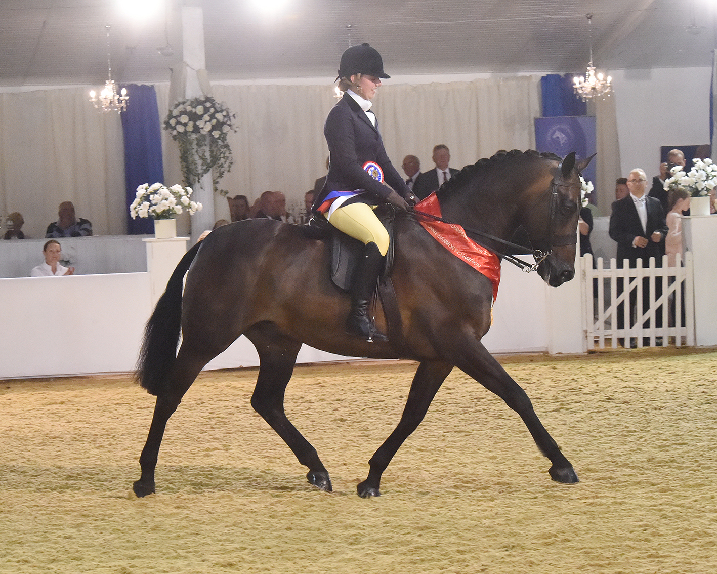 Cassie Hartley and Archeval Boutique Amadeus - Championship Showing Success for Cassie Hartley