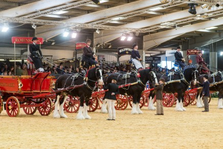 Shire Horse Society National Show 2015 2 pic by James Bedford 1 436x291 - New venue, new format for Shire Horse Society National Show 2016