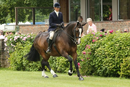 Jayne Ross and Cob in Hood photo by Julian Portch 436x291 - Black Country Saddles Sponsor Showing Supremo Jayne Ross
