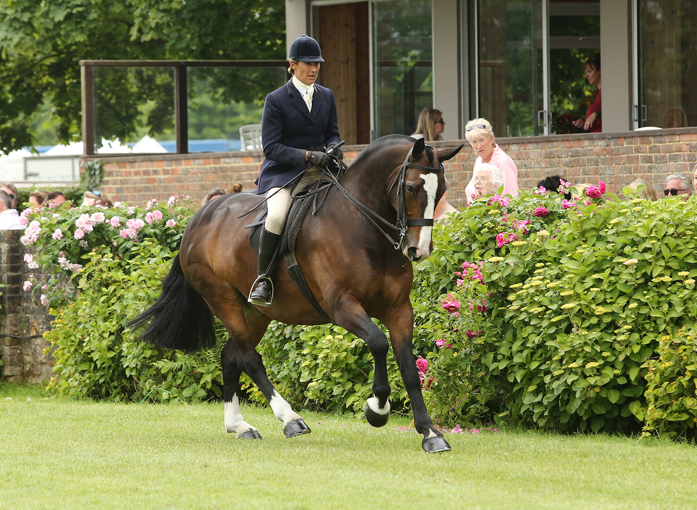 Jayne Ross and Cob in Hood photo by Julian Portch - Black Country Saddles Sponsor Showing Supremo Jayne Ross
