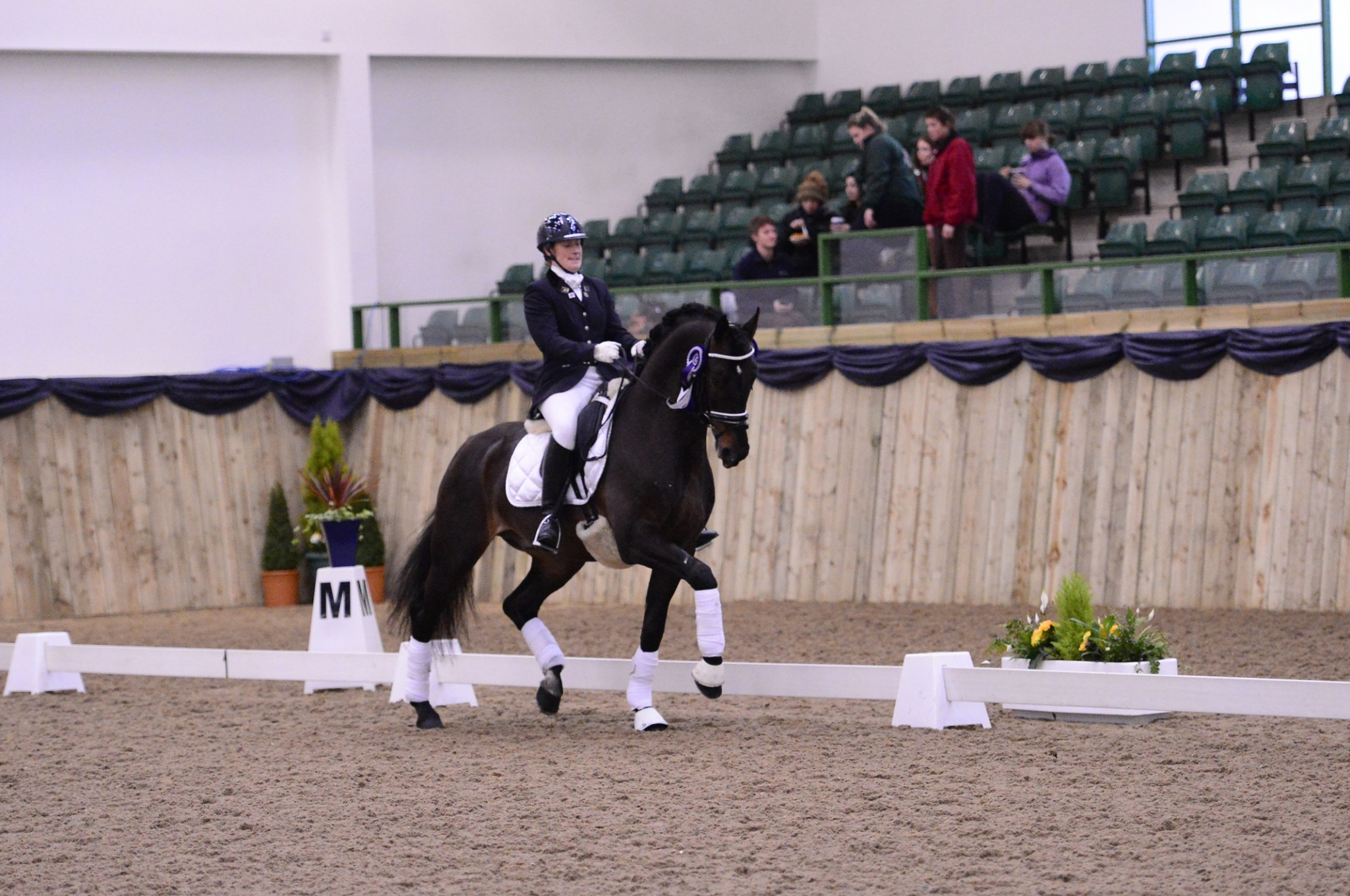 Cyden Cadans M - Cyden Dressage Stallions Joins Forces with South Grange Stud