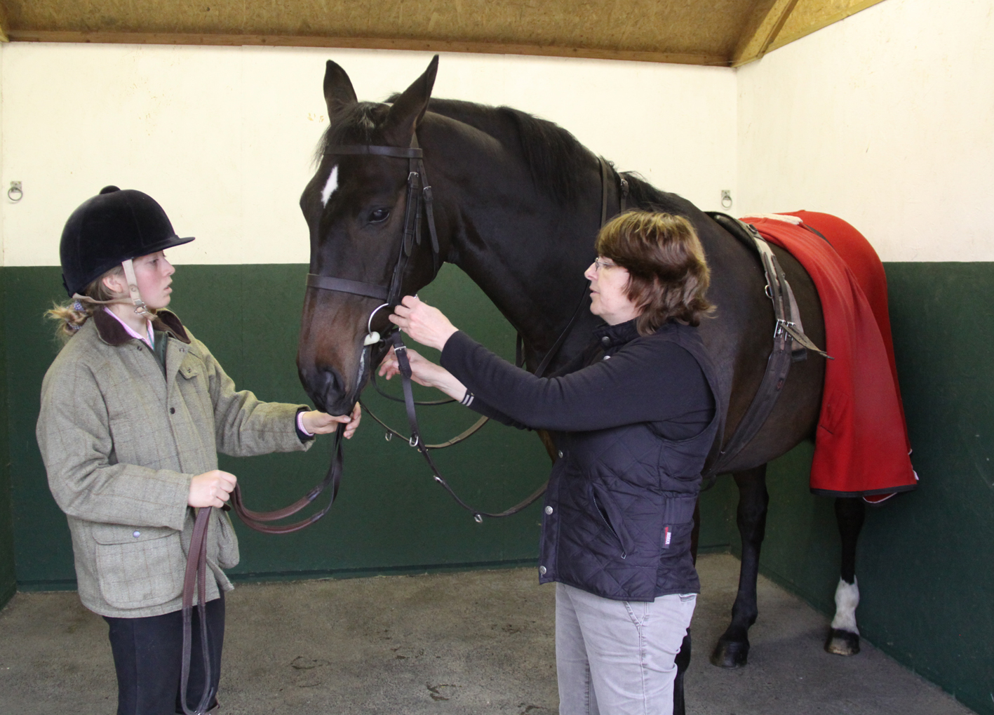 Correctly Fitting a Bridle - Fitting a Bridle