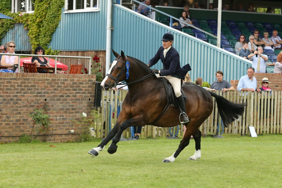Perfecting Your Show Ring Gallop with Jayne Ross