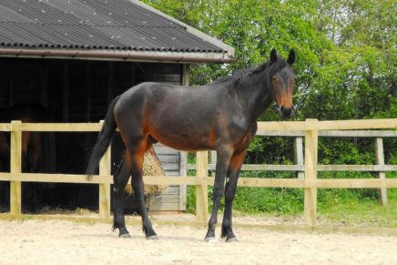 Twiglet 436x291 - Horse found collapsed is now healthy and ready to meet the public at the HorseWorld Charity Open Day on Saturday 25th June.