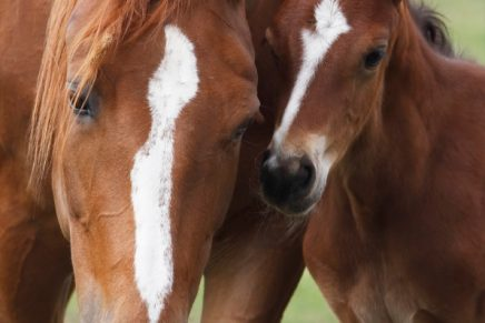 Horse Hospital Marks 25 years with Open Day