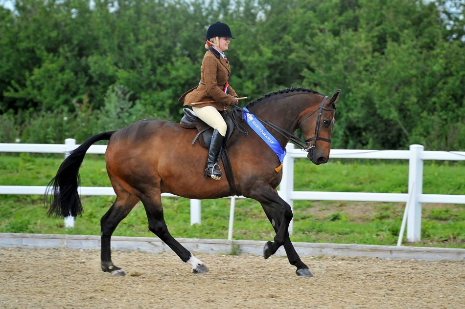 Nottinghamshire rider qualifies for Horse of the Year Show