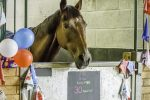 TRC Open Day 3 150x100 - The British Thoroughbred Retraining Centre Open Day a Huge Success