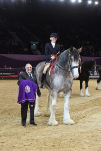 British Ridden Heavy Horse Championship 2 200x300 - Clydesdale Kinclune Danny Boy leads the Heavy Horses in hugely successful first ridden class at HOYS