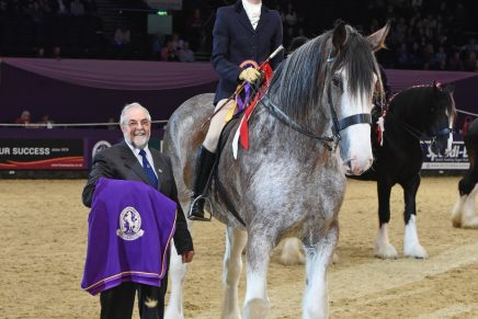 British Ridden Heavy Horse Championship 2 436x291 - Clydesdale Kinclune Danny Boy leads the Heavy Horses in hugely successful first ridden class at HOYS