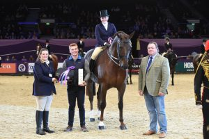 guy-fawkes-iii-intermediate-show-hunter-of-the-year-champion