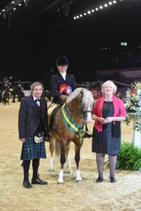 NPSBaileys Horse Feeds Mountain Moorland Ridden Pony of the Year 200x300 - Cadlanvalley Buzby is victorious in the NPS/Baileys Horse Feeds Mountain & Moorland Ridden Pony of the Year