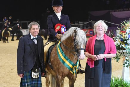 NPSBaileys Horse Feeds Mountain Moorland Ridden Pony of the Year 436x291 - Cadlanvalley Buzby is victorious in the NPS/Baileys Horse Feeds Mountain & Moorland Ridden Pony of the Year