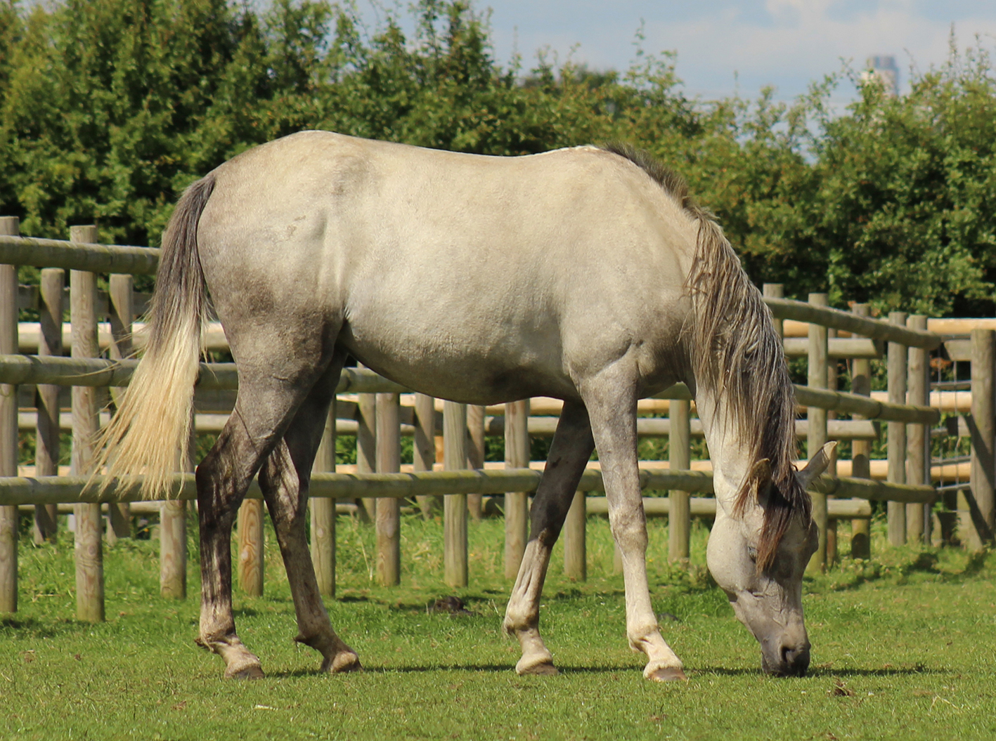 emerald now safe and well in charity care - Woman Sentenced for Horse Cruelty