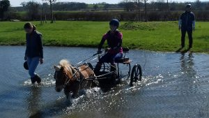 low res carriage driving 300x169 - British Indoor Carriage Driving Championships this weekend