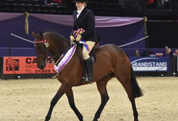 HOYS N1H 7022 C021 SEIB Racehorse to Riding Horse Championship 360x245 - Beware Chalk Pit in top form to take the SEIB Racehorse to Riding Horse of the Year Championship