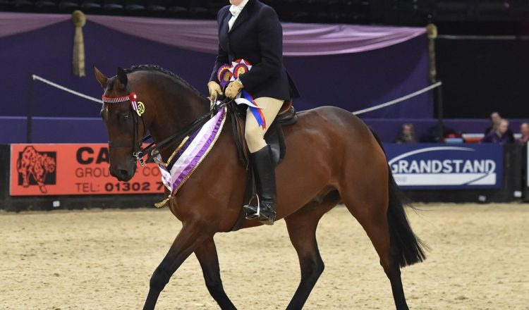 HOYS N1H 7022 C021 SEIB Racehorse to Riding Horse Championship 750x440 - Beware Chalk Pit in top form to take the SEIB Racehorse to Riding Horse of the Year Championship