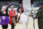 HOYS S1H 3990 C026 MM Mini Pony of the Year Championship 150x100 - Brineton Colne Mountain & Moorland Mini Pony of the Year Championship