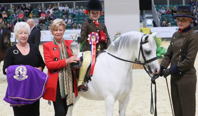 HOYS S1H 3990 C026 MM Mini Pony of the Year Championship 750x440 - Brineton Colne Mountain & Moorland Mini Pony of the Year Championship