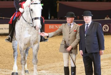 HOYS The Barber Family British Ridden Heavy Horse Championship 360x245 - The Barber Family British Ridden Heavy Horse of the Year Championship