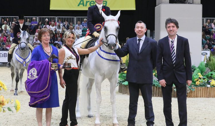 HOYS C028 Ridden Purebred Arab Championship 750x440 - Simon Constable Equine Vets and Mr & Mrs Roberts Ridden Purebred Arab of the Year