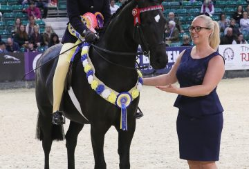 hoys 2017 S1H 4289 C027 Ridden Partbred Championship 360x245 - Equissage Pulse Ridden Partbred Pony of the Year Championship