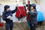 Peeta Stomach Tube  150x100 - Peeta's battle – Horse rescue charity's fight to save young horse.