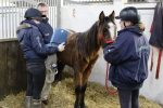 Peeta having a scan  150x100 - Peeta's battle – Horse rescue charity's fight to save young horse.