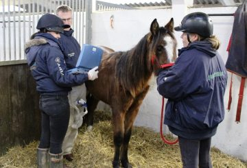 Peeta having a scan  360x245 - Peeta's battle – Horse rescue charity's fight to save young horse.