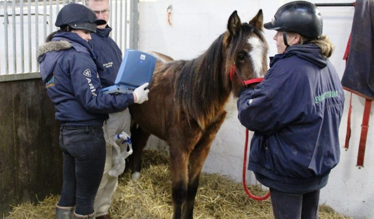 Peeta having a scan  750x440 - Peeta's battle – Horse rescue charity's fight to save young horse.