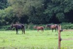 Rue Peeta and Katniss  150x100 - Peeta's battle – Horse rescue charity's fight to save young horse.