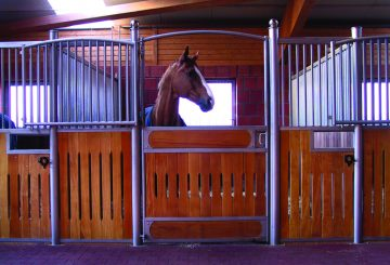 haygain boxrest image 360x245 - Keeping a horse on box rest happy and healthy.