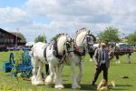 Heavy horses at Nottinghamshire County Show 150x100 - As Seen On TV: Poldark Stunt Horses to Take Centre Stage At This Year's Notts County Show