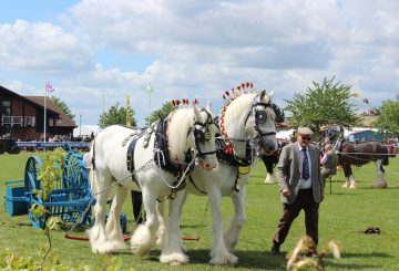 Heavy horses at Nottinghamshire County Show 360x245 - As Seen On TV: Poldark Stunt Horses to Take Centre Stage At This Year's Notts County Show