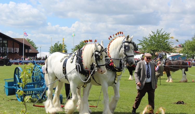 Heavy horses at Nottinghamshire County Show 750x440 - As Seen On TV: Poldark Stunt Horses to Take Centre Stage At This Year's Notts County Show