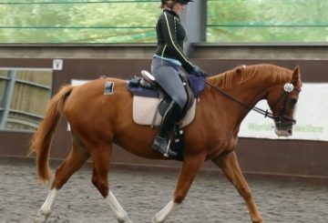 Moderate rider 3 2 360x245 - Landmark pilot study addresses effects of rider weight on equine performance