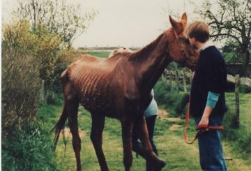 Welfare case 360x245 - A plea from the horses to save The Racehorse Sanctuary from closure