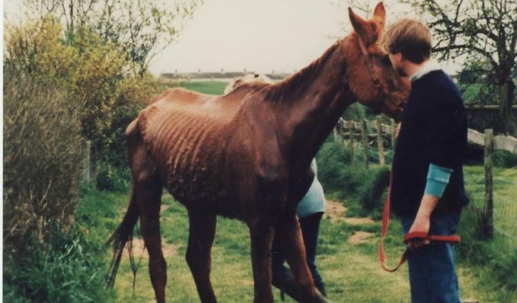 Welfare case 750x440 - A plea from the horses to save The Racehorse Sanctuary from closure